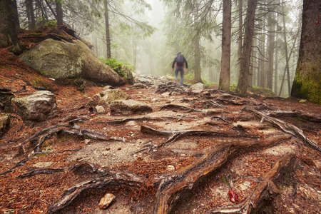blurred motion: Traveler hiking through deep forest in the mountains - blurred motion Stock Photo