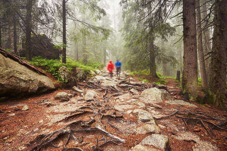 couple in rain: Travelers hiking through deep forest in the mountains - blurred motion Stock Photo