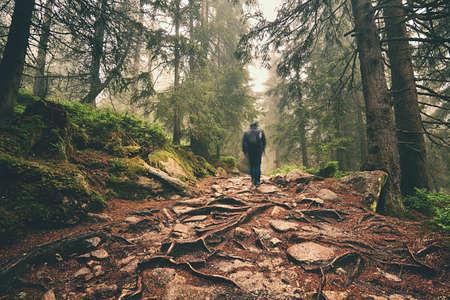 산에서 깊은 숲을 통해 하이킹 여행자 - 흐리게 모션 스톡 콘텐츠