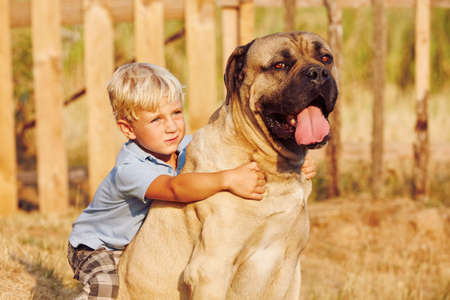 cane corso: Little boy is playing with his large dog. Stock Photo