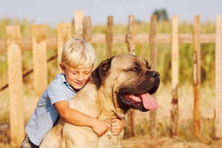 Little boy is playing with his large dog. Stock Photo