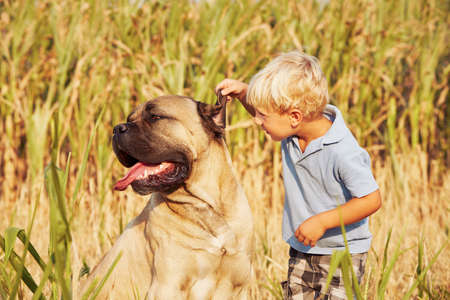 large dog: Little boy is playing with his large dog. Stock Photo