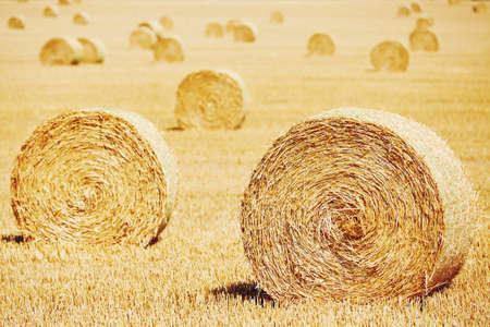 a straw: Straw bales on the field after harvest.