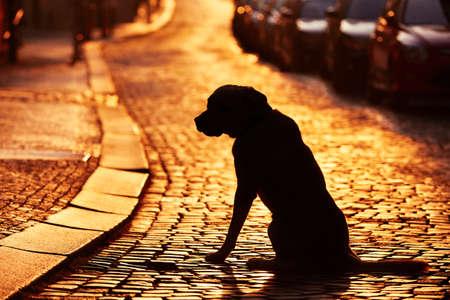 Sziluettje a kutya az utcán naplementekor.