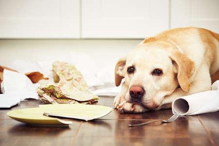 いたずらな犬します ― キッチンでの混乱の真ん中に横になっている犬。