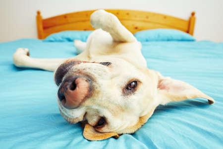 犬はセレクティブ フォーカス - ベッドの上に横になっています。 写真素材