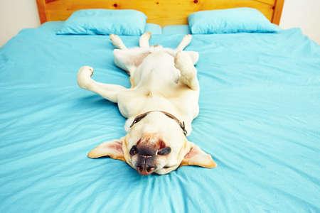 개 침대에 다시 누워있다 - 선택적 포커스 스톡 콘텐츠