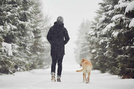 winter weather: Man walking with his yellow labrador retriever in winter landscape