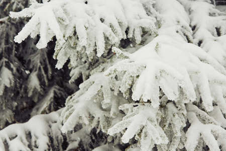 winter time: Winter time - fresh snow in forest