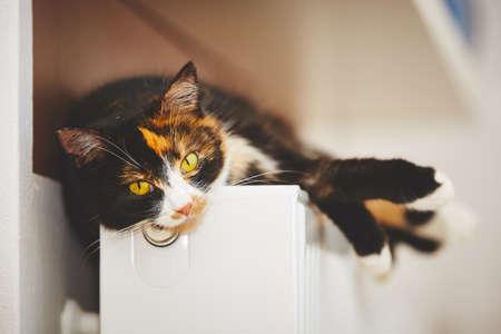 Cat is relaxing on the warm radiator Foto de archivo