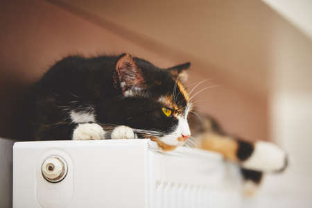 Cat is relaxing on the warm radiator Stock Photo