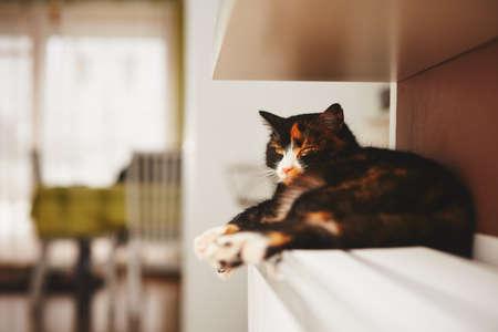 Cat è rilassante sul radiatore caldo Archivio Fotografico