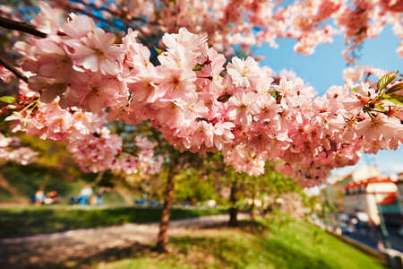 都市公園、プラハ、チェコ共和国における春の日 写真素材