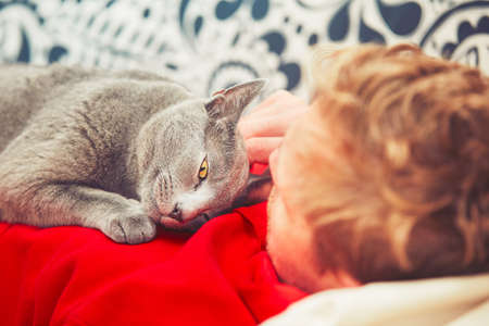 russian blue: Young man with his russian blue cat at the home