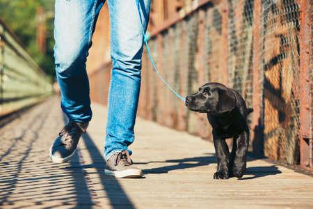 강아지와 함께 아침 산책 (검은 래브라도 리트리버). 젊은 남자는 가죽 끈에 걸어 자신의 강아지를 훈련한다. 스톡 콘텐츠