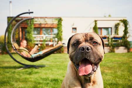 Young man reading book (learning) in the swing and large dog resting on the garden of the modern family house. Stock fotó