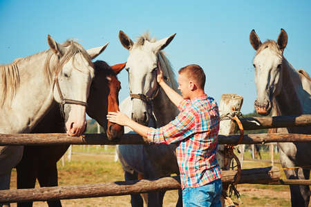 stroking: Young man stroking horses at the farm in summer day.
