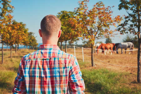 Summer in nature. Young man (farmer) walking on the footpath along the paddock horses.      resting under the tree and watching horses. Stock Photo