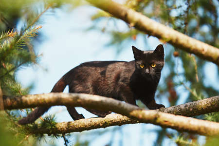 Curious cat in the garden. Black kitten with yellow eyes climbing up to tree.