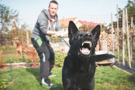Aggressive dog is barking. Young man with angry black dog on the leash. Stock Photo