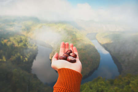 vltava river: Hand of young man with handful of the chestnuts and view on river valley in morning fog. Vltava river in Central Bohemia, Czech Republic.