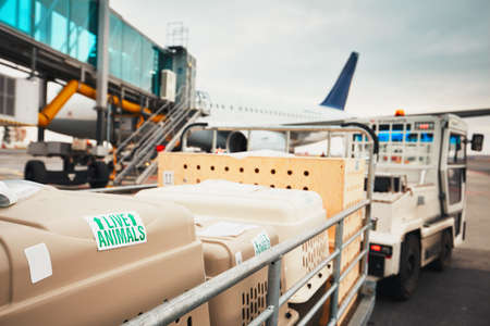 Kutyák utazás repülővel. Dobozok élő állatok a repülőtéren.