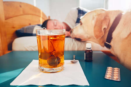 sleeping pills: Loyal dog and his sick owner in bed. Selective focus on the hot tea and medicine on the table.