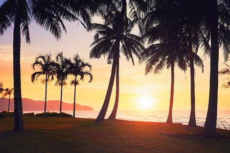 すばらしい夕日のビーチでヤシの木のシルエット。夏のバケーション、旅行のコンセプトです。ボルネオ島、マレーシア。 写真素材