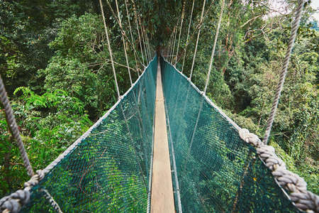 clambering: Long elevated walkway through the treetops in rainforest - Borneo, Malaysia
