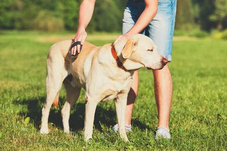 개를 정기적으로 돌보는 일. 그의 노란색 래브라도 리트리버 칫솔질 젊은 남자.