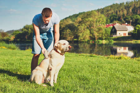 Regular caring for dog. Young man brushing his yellow labrador retriever. Stock Photo
