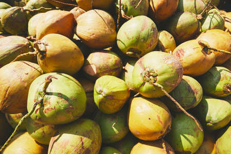 Refreshment with tropical fruit. Heap of the fresh coconuts. Stock Photo