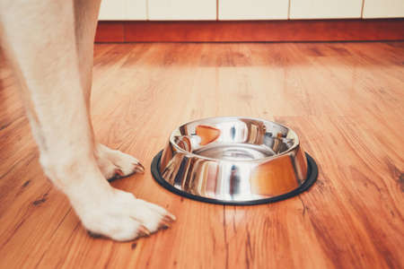 Hungry dog waiting for feeding. Selective focus on the empty bowl. Imagens