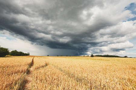 폭풍이오고있다. 불쌍한 날씨와 익은 시리얼 필드.