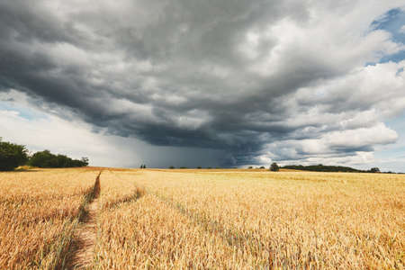 The storm is coming. Poor weather and ripe cereal fields. Reklamní fotografie - 84407944
