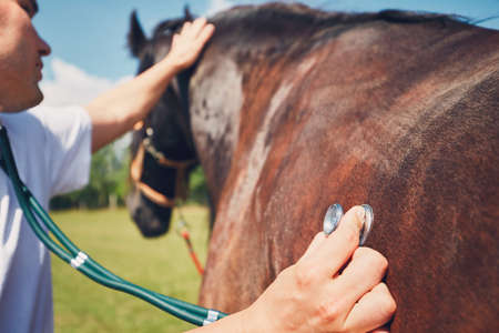 馬の医療試験 (ハートビートと肺を聞いて) 中に獣医師。