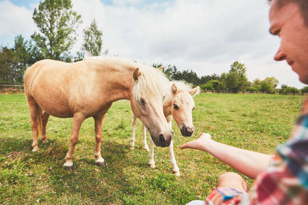 Young farmer caress mare with foal of the miniature horses. Reklamní fotografie