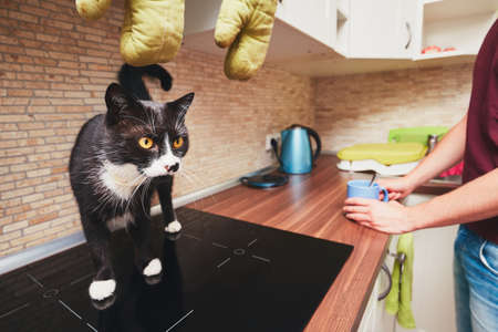 Leven met huisdieren. Man met nieuwsgierige kat in de keuken. Stockfoto