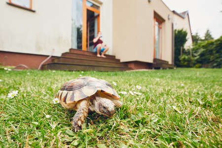 Life with domestic animals. Man resting and his turtle walking in grass on the garden.