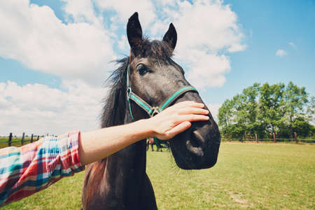 Summer day on the farm. Young man caress horse.  Reklamní fotografie