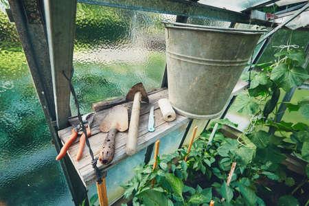 手のこて、小さな鍬、金属製のバケツ、温室の中の棚に他のツールをガーデニングします。 写真素材