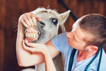 Veterinary medicine at farm. Veterinarian examining teeth of the horse in the stable. Reklamní fotografie - 83875706