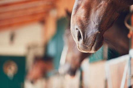 현대 안정 - 선택적 초점에서 말의 코