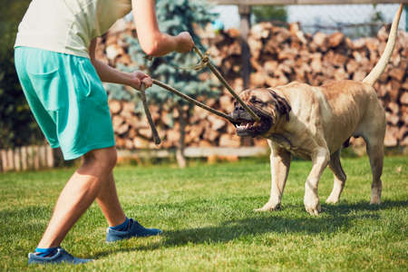 Young man is playing with the dangerous dog in the garden. Stock Photo