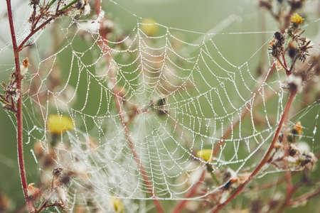자연에가 시즌입니다. 아침이 슬 - 선택적 포커스 덮여 꽃에 거미줄