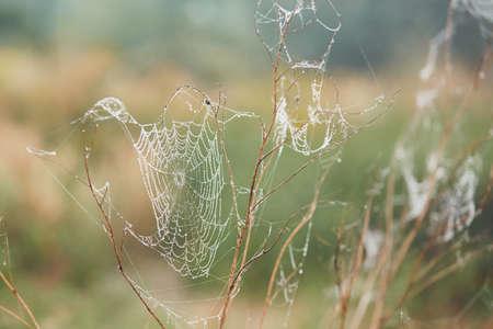 Herfst seizoen in de natuur. Spinneweb op bloem die met ochtenddauw wordt behandeld - selectieve nadruk Stockfoto