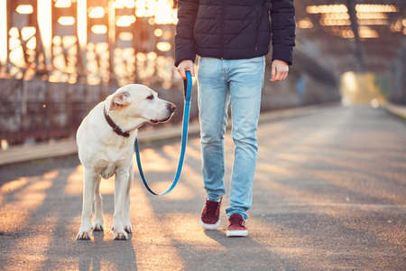 Morgenspaziergang mit Hund. Junger Mann mit seinem Labrador-Apportierhund auf der Eisenbrücke bei dem Sonnenaufgang.