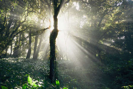 Mysterious sunrise in deep tropical rainforest in Thailand mountains. Stock Photo