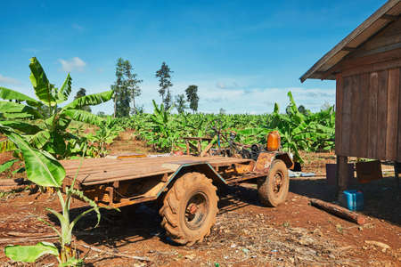 Old truck in the banana plantation. Rural scene in Cambodia.