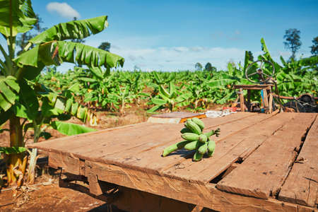 Bananas on the old truck in plantation. Rural scene in Cambodia. Standard-Bild